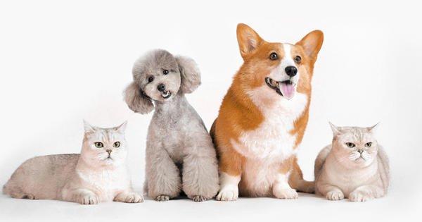 Franquia Segmento Pet